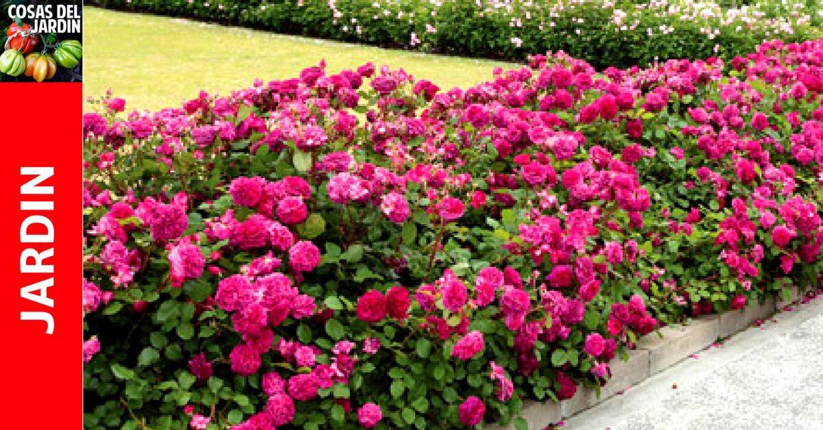Cómo Y Cuándo Podar Las Rosas Se Hace Así Cosas Del Jardin