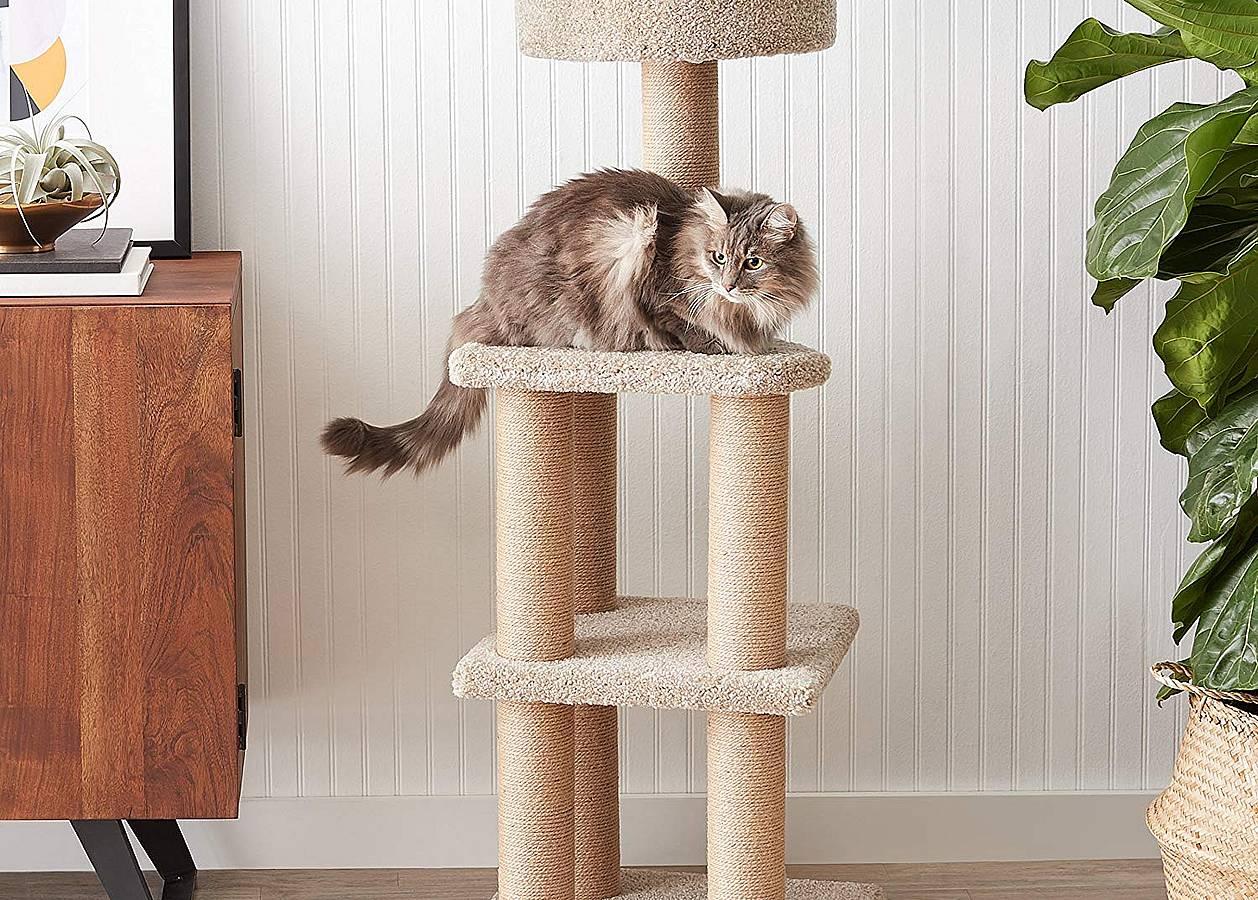 Mejores postes rascadores para gatos de 2019 (análisis) 1