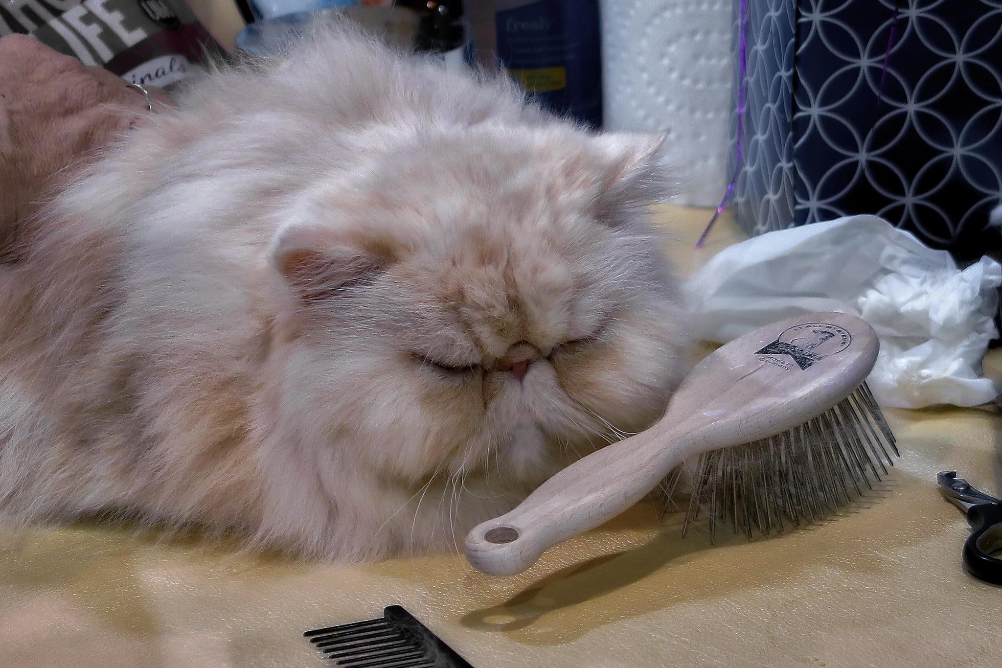 Guía y mejores cepillos para gatos para un aseo óptimo