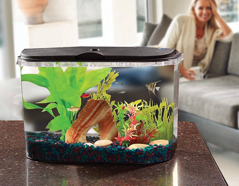 Mejores acuarios para casa