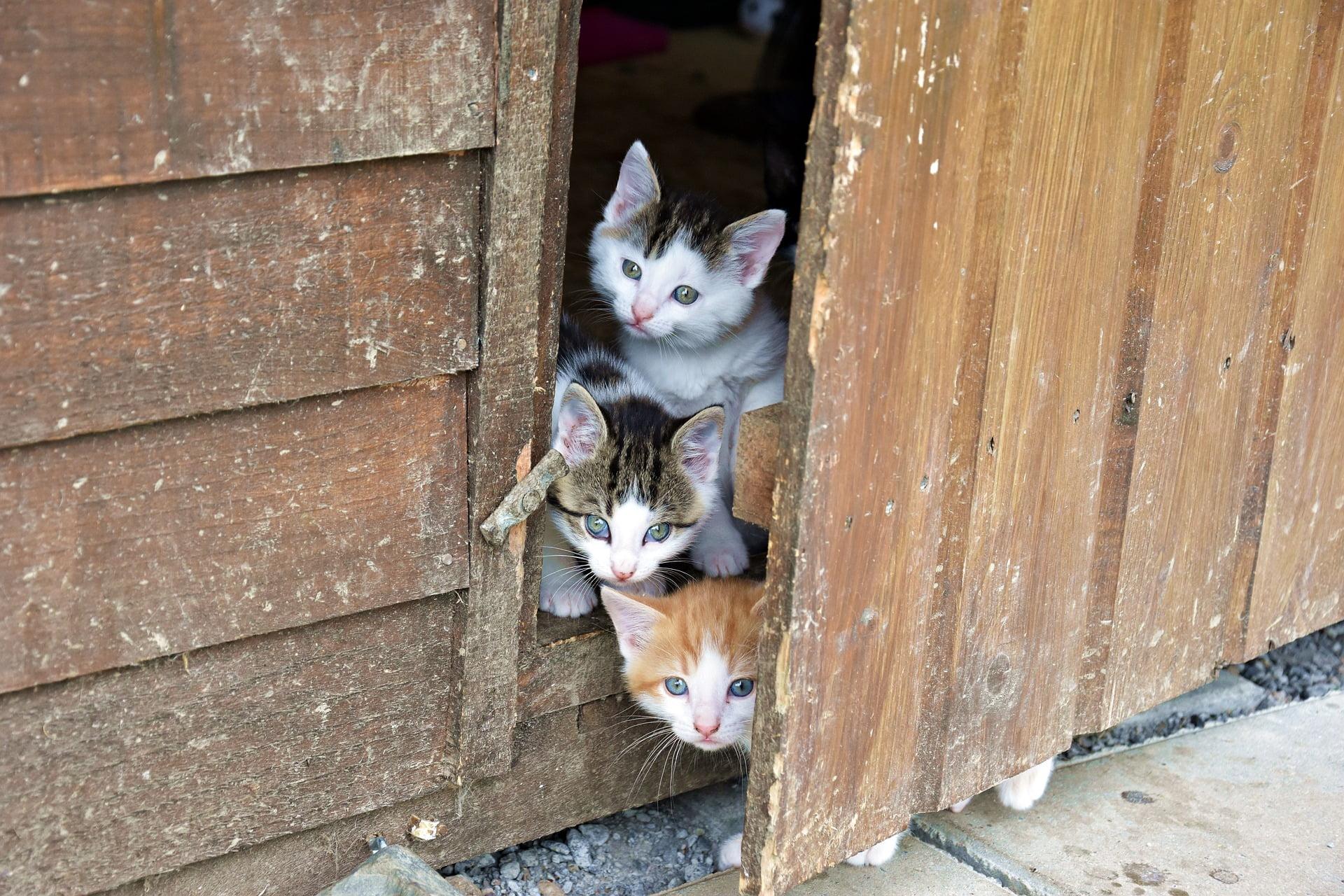 Mejor manera de presentarle a tu gato un gato nuevo 2