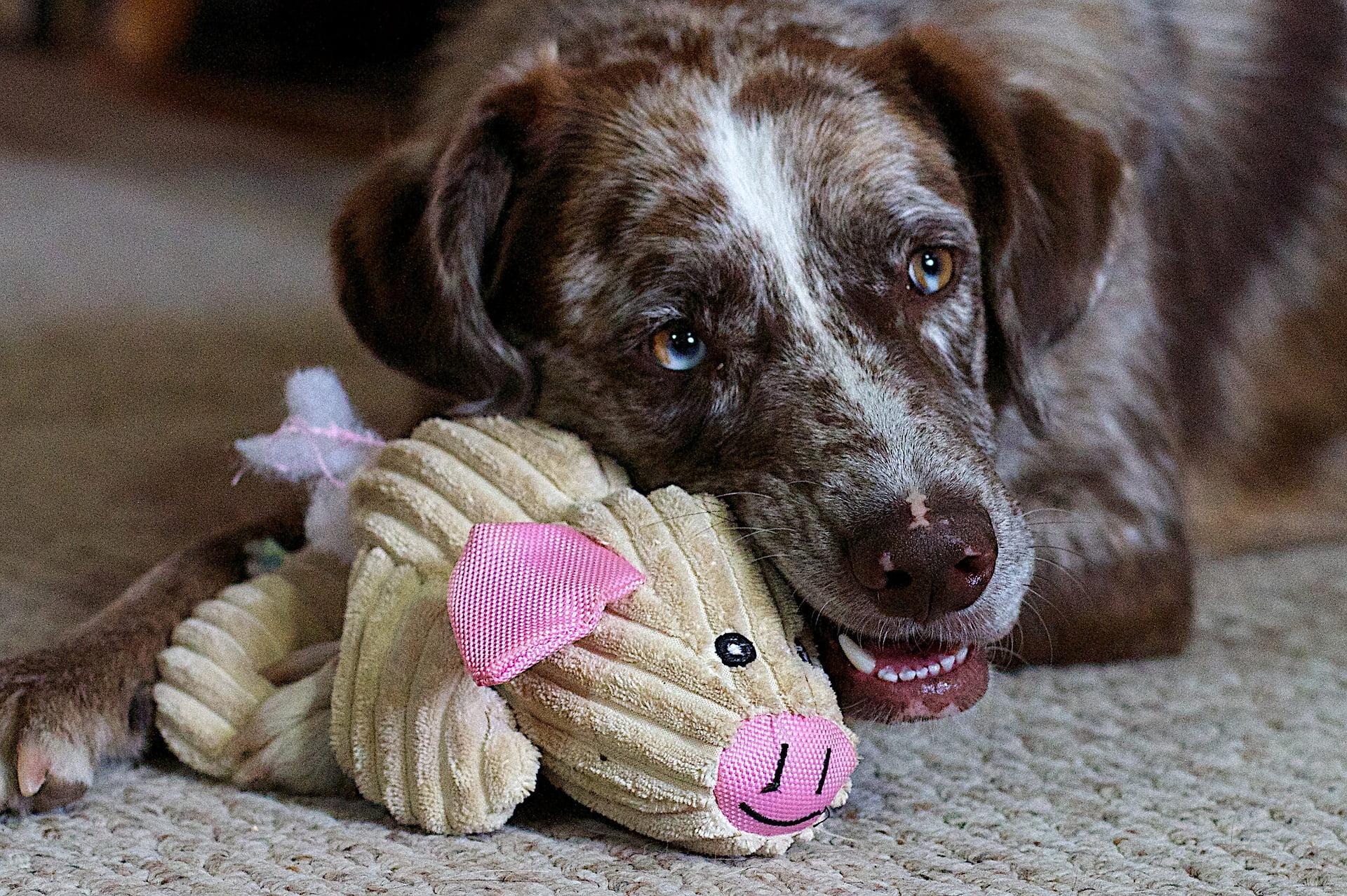 Los mejores regalos de Navidad para perros (de 2019) 1