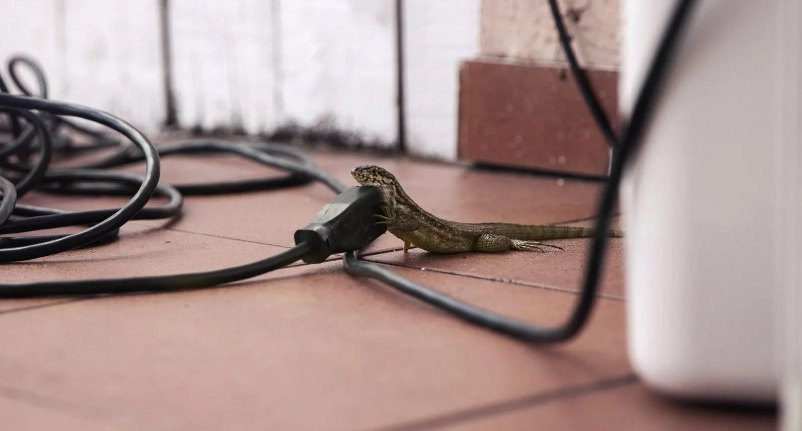 Guías sobre reptiles como mascotas