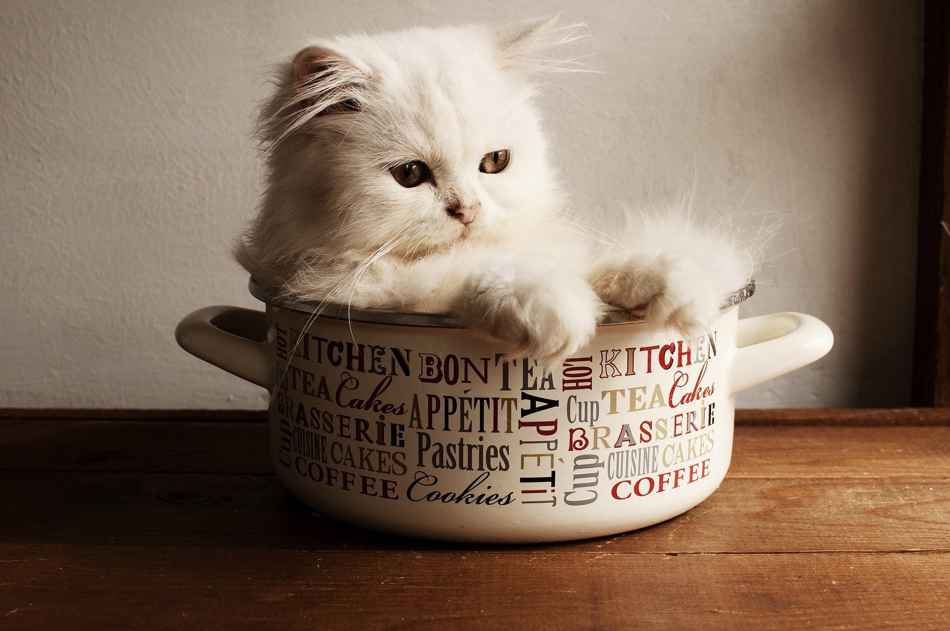 Cómo mantener a los gatos alejados de las encimeras