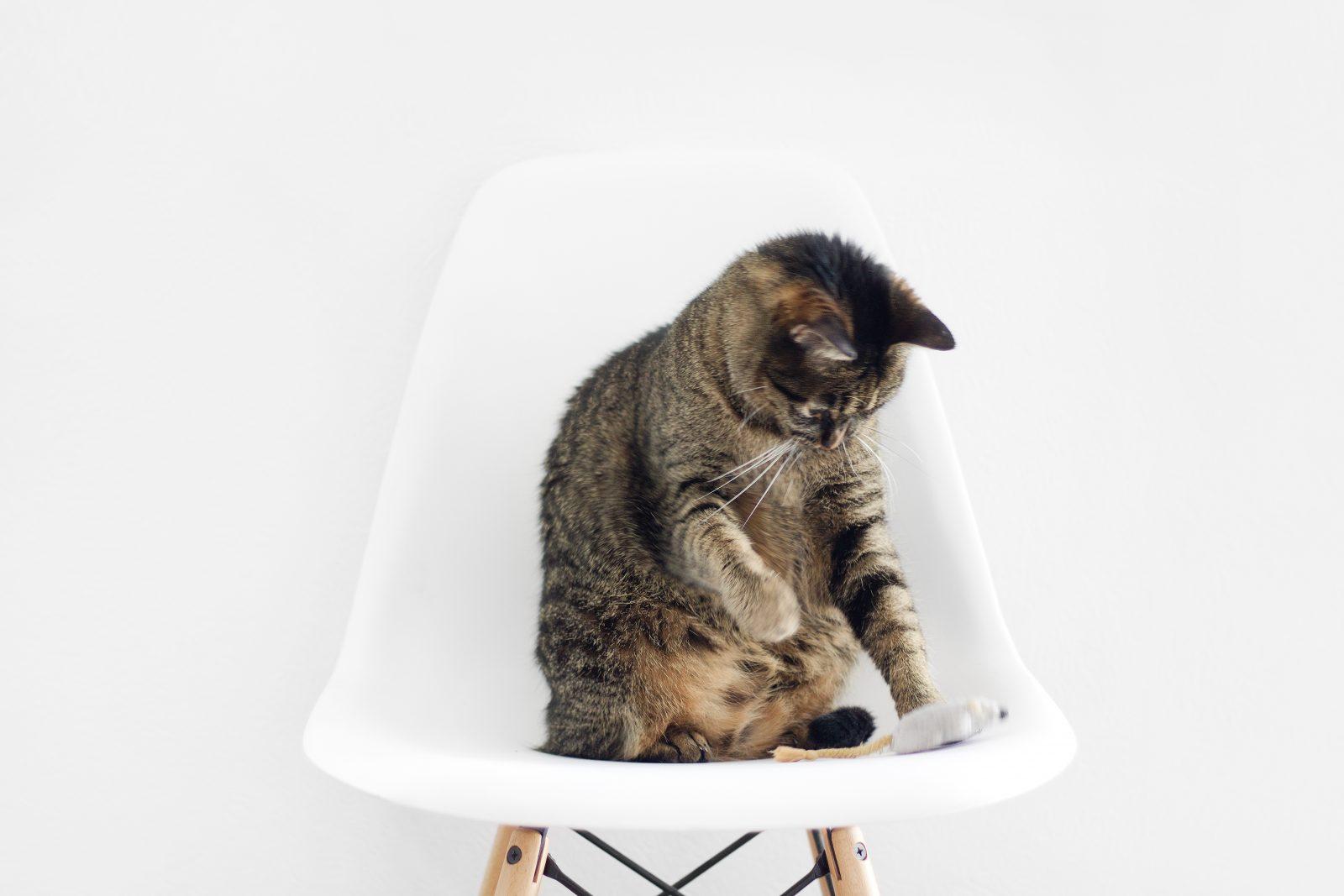Cómo mantener a tu gato activo en invierno