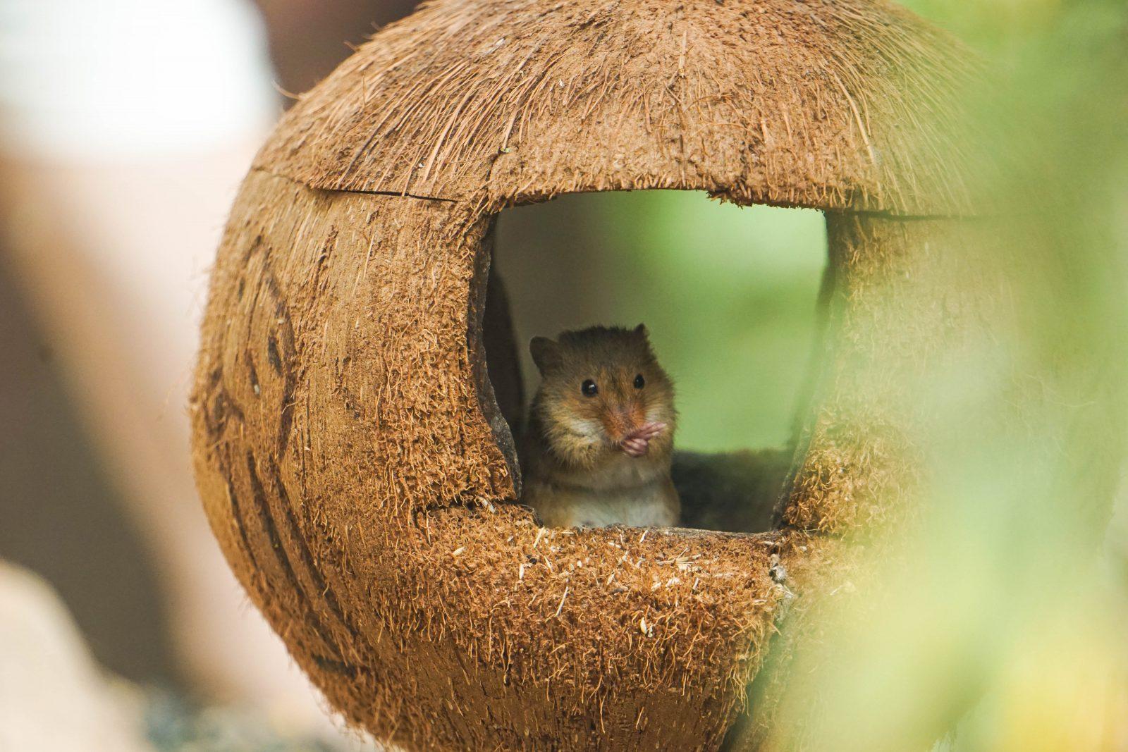 Guías de roedores como mascotas