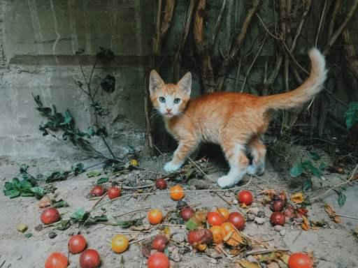 ¿Por qué los gatos llevan su comida lejos de sus cuencos? Los gatos llevan su comida lejos de sus tazones