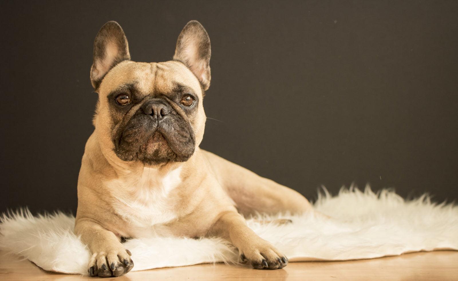 Vitaminas para perros para los problemas de piel