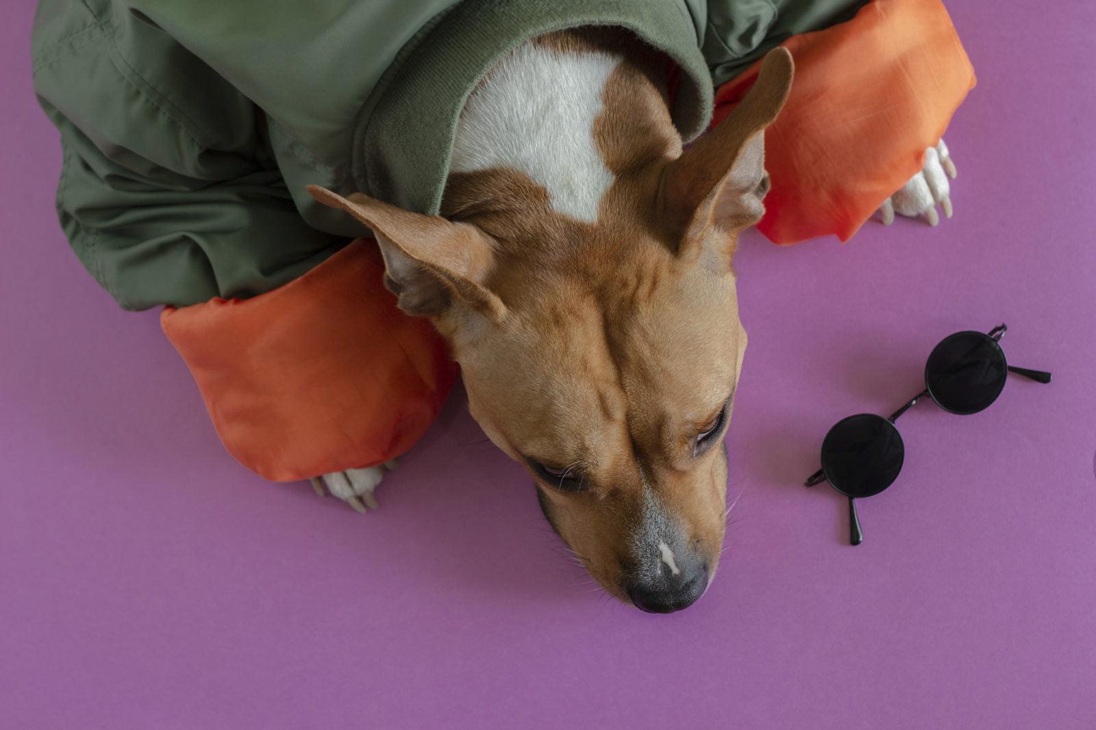 Abrigos para perros para invierno
