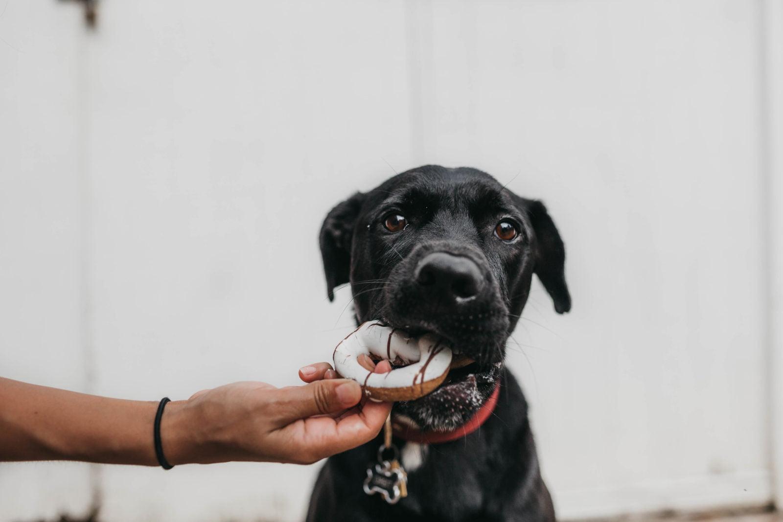 Suplementos para perros