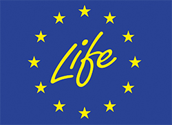 logotipo life