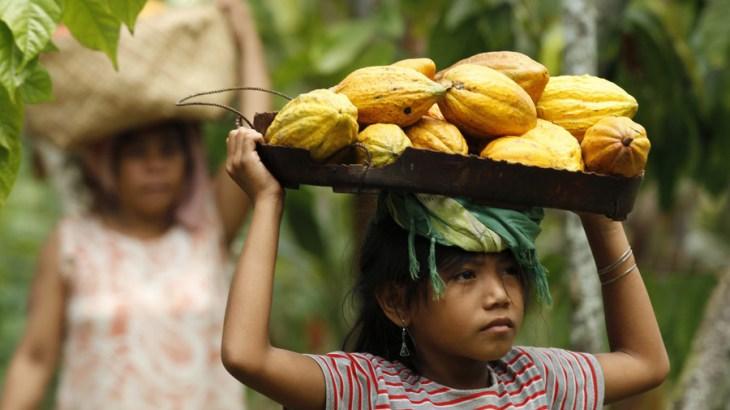 Niña trabajando con su madre en la cosecha del cacao.
