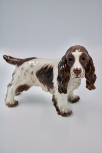 large Cocker Spaniel