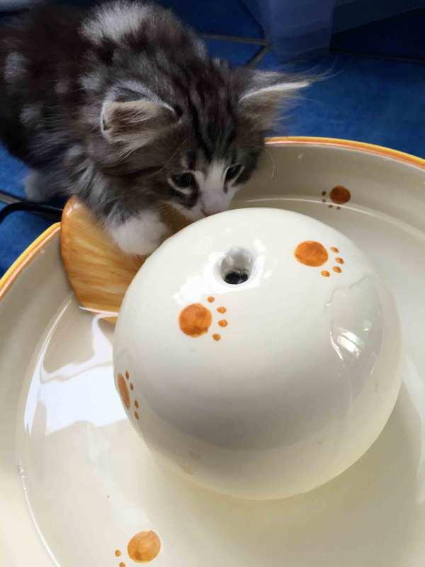 Fontanelle-per-gatti