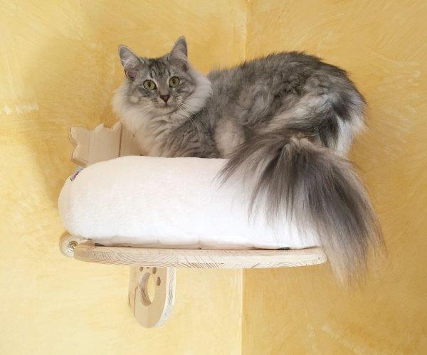 """cuccetta """"gattino vanitoso"""" con cuscino"""