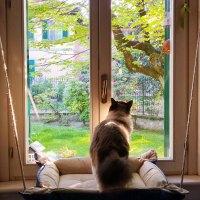 Belvedere - pensiline per finestre robuste e prati…