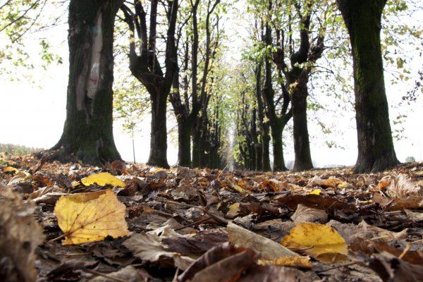 Foliage sulle Mura di Bergamo