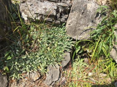 Bocche di aria fredda e vegetazione microtermica