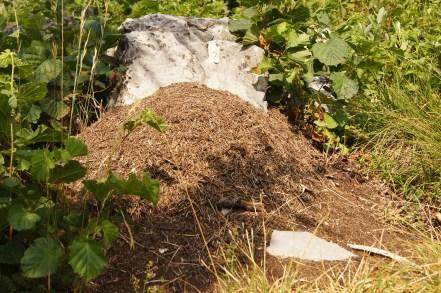 Formicaio gigante di Formica Rufa