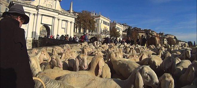 Festival del pastoralismo pecore alla porta San Giacomo
