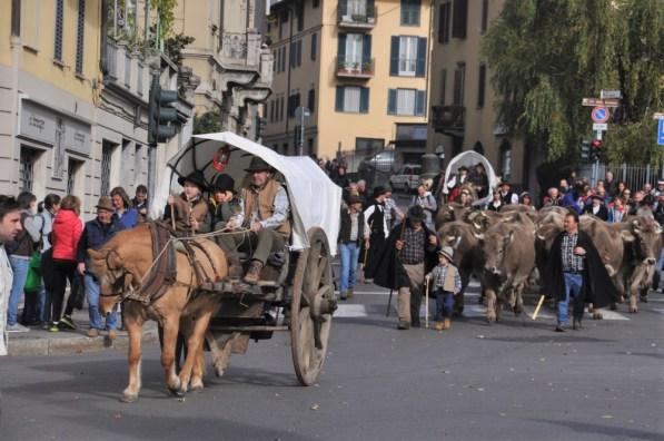 Festival-pastoralismo_mucche che sfilano