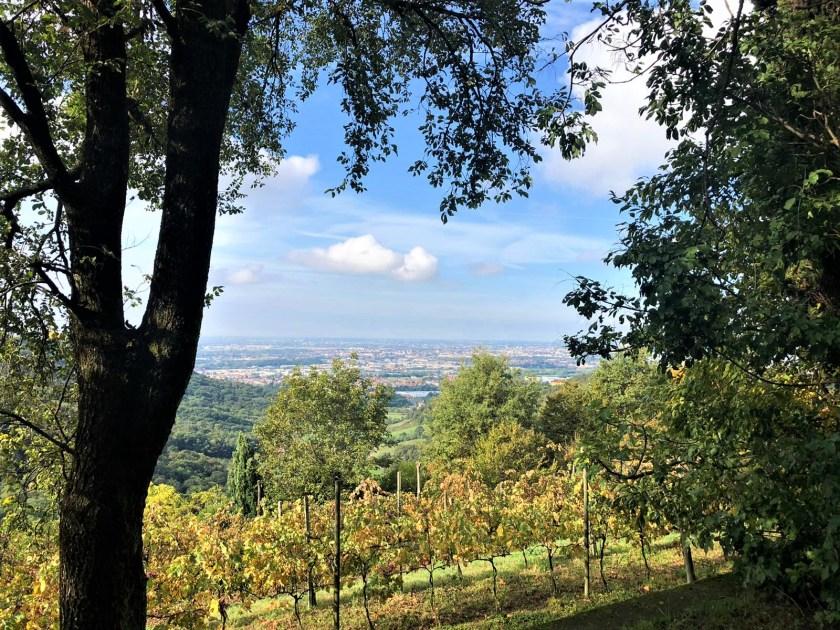 Paesaggio visto dal Bosco