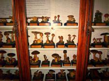 Museo di scienze naturali Celana