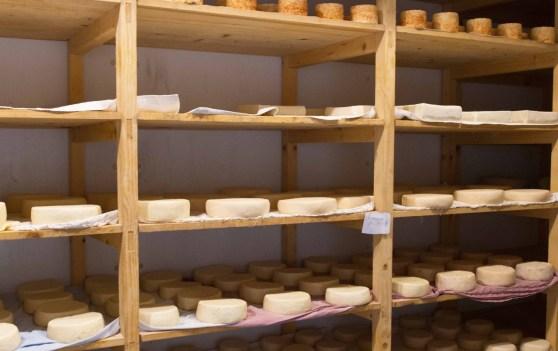 Azienda_Agricola_Palamini_formaggi