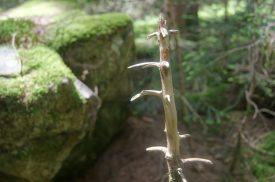 vegetazione nel bosco della valle del Vò