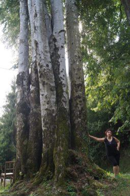 Alberi Secolari sul Monte Zucco