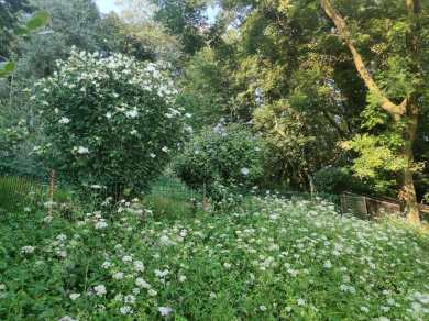 giardino botanico Oasi WWF Valpredina