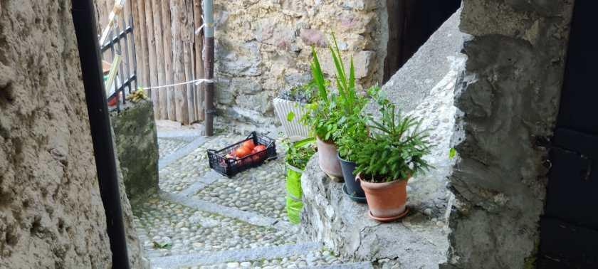 Sparavera cesta di pomodori e vasi di piante