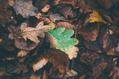 Autunno foglie cadute