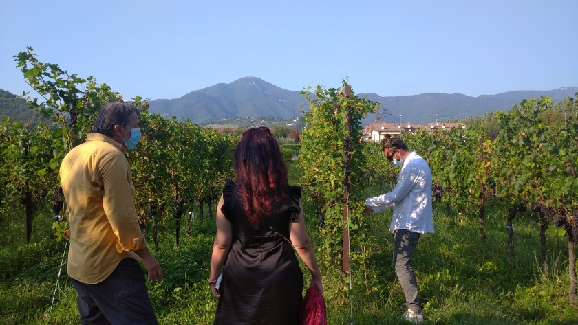 Angelo Pecis illustra le caratteristiche della vigna mentre Lorenzo Pecis toglie le foglie