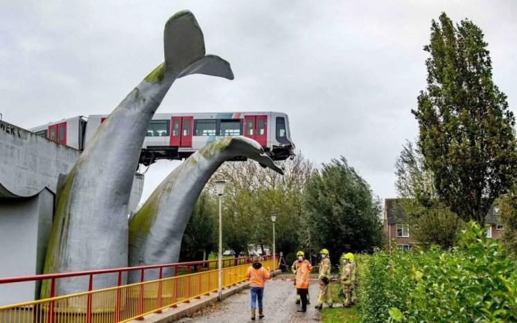 Coda di balena salva metropolitana