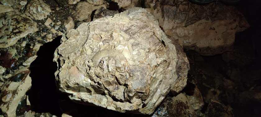 conchiglie fossili incastonate nella roccia