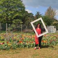 Famolo strano (all'olandese) | Vivi l'esperienza della raccolta self service dei tulipani a Bergamo
