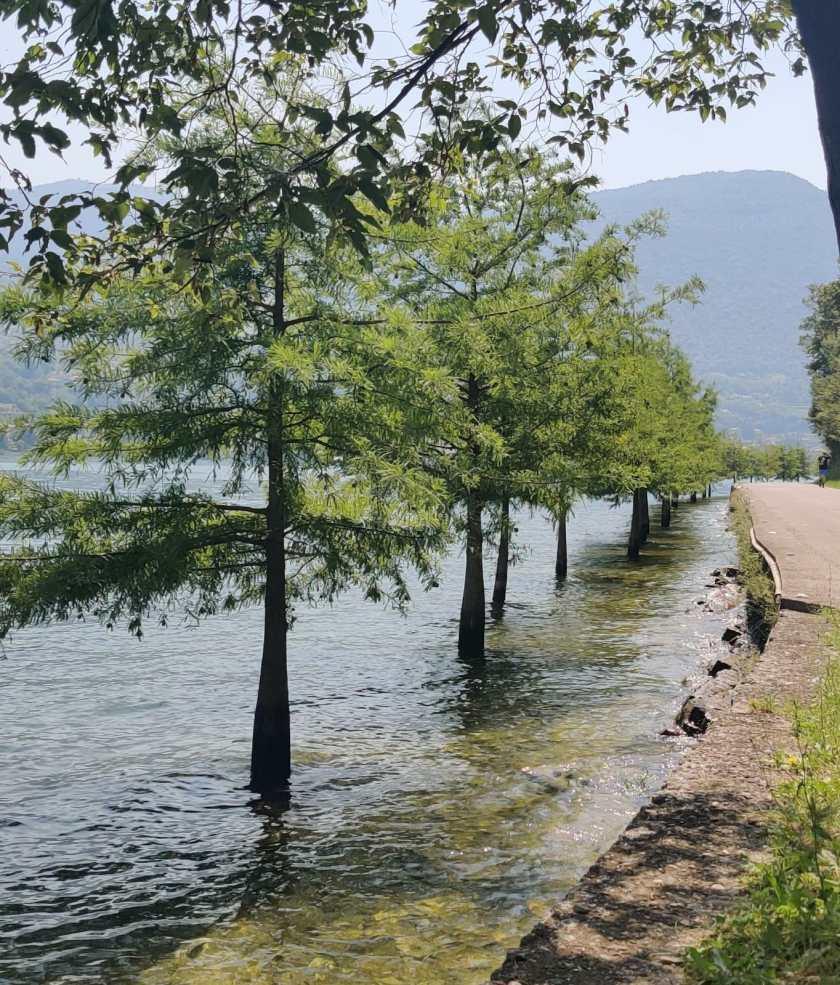 Alberi con fusto in acqua Monte Isola