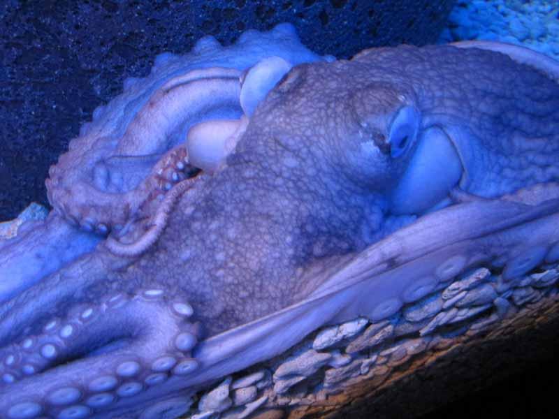 Close-up of an octopus.
