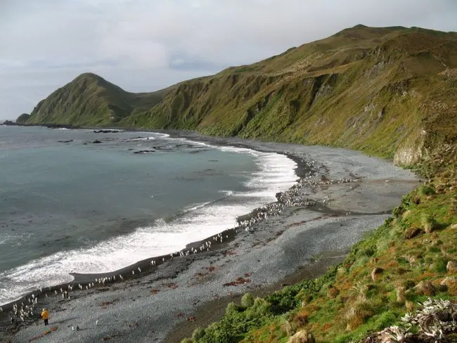 Macquarie Island coast.