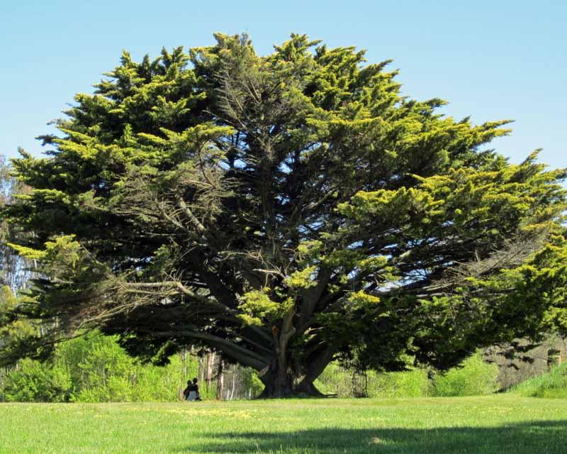 A big tree.