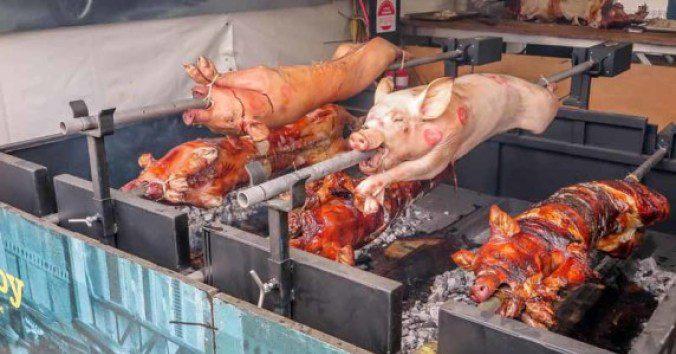 Pigs roasting.