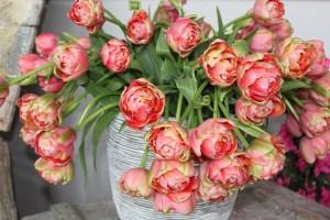 Flori de sarbatoare, misterioase si imprevizibile