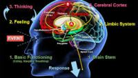 Cum ne afecteaza emotiile creierul?