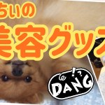 ポメラニアン ももちぃの美容グッズ  DOG POMERANIAN ANIMAL