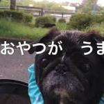 パグ散歩 【韓国コスメ購入品】コリアンタウン