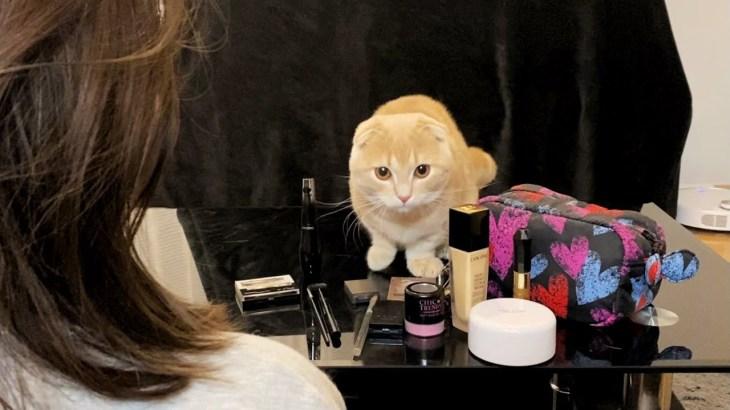 妹がメイクを始めると決まって現れる猫たち