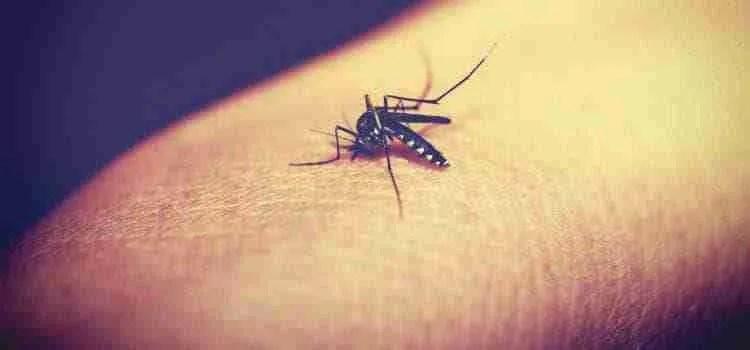 El mejor Remedio casero para picaduras de insectos