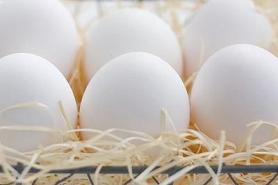 アミノ酸が豊富な卵