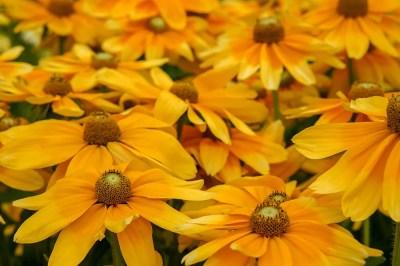 Yellow Flowers Gelbe Blumen nature summer Natur Sommer желтые цветы лето природа